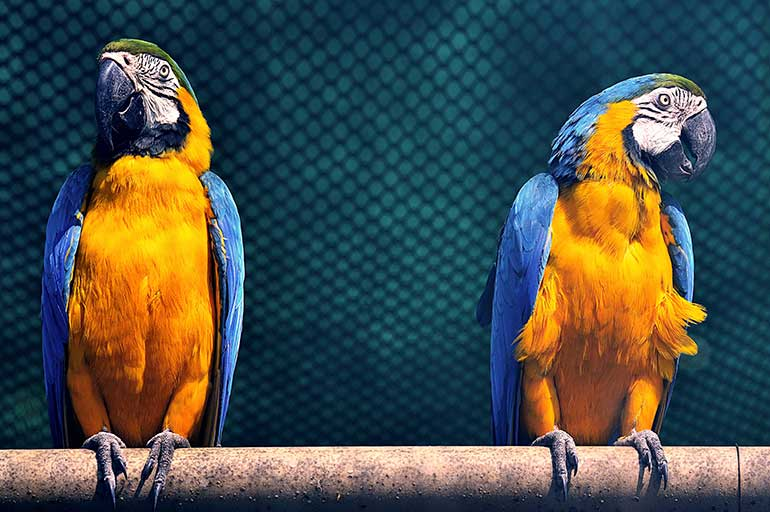 Illegale handel in beschermde soorten: praktische aanpak op het terrein